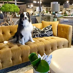 Vp Positive Vibes Charter Furniture Dallas Showroom